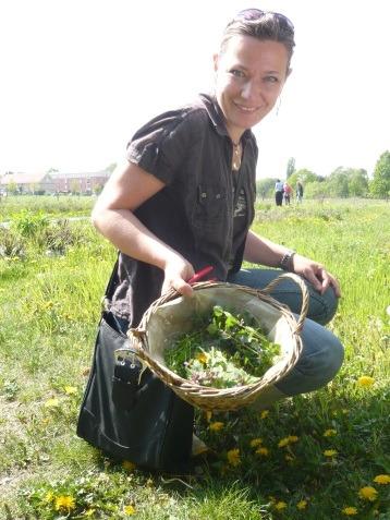 Widkräuterführungen und Kräuterwanderungen: Heilpflanzen und Wildkräutern in Berlin