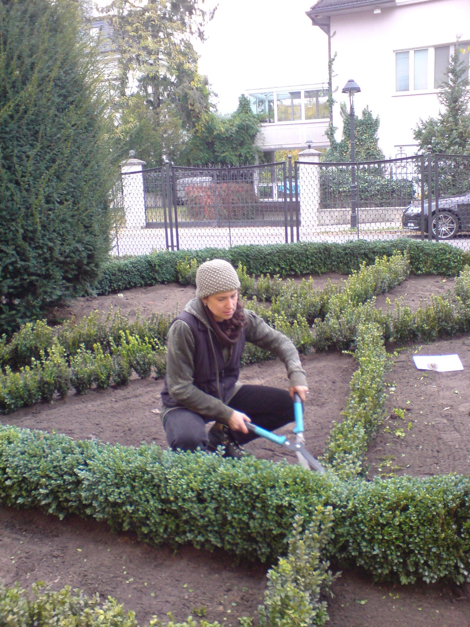 Englischer Knotengarten anlegen: Gartenlabyrinth dank Knotenbeete aus Buchsbaum und Bepflanzung mit Staudenpflanzen und Zwiebelpflanzen