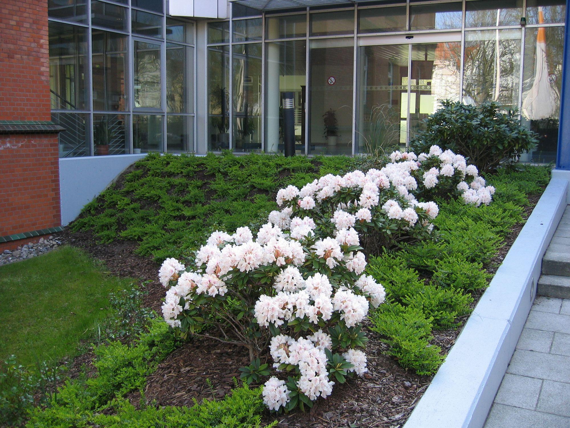 Bepflanzung und Gartenpflege von Gewerbeanlagen in Berlin: Pflegarbeiten und Düngung der Gartenbereiche, Schnittarbeiten, Rasenpflege