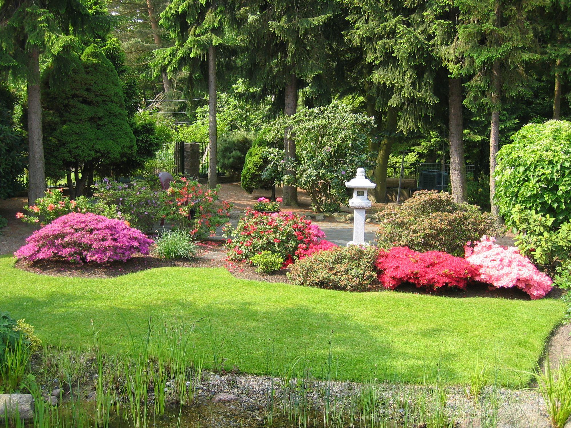 Azaleen und Rhododendron im japanischen Garten, Rhododendron Pflege - richtig pflanzen, gießen & düngen, Rasenpflege, Teichpflege