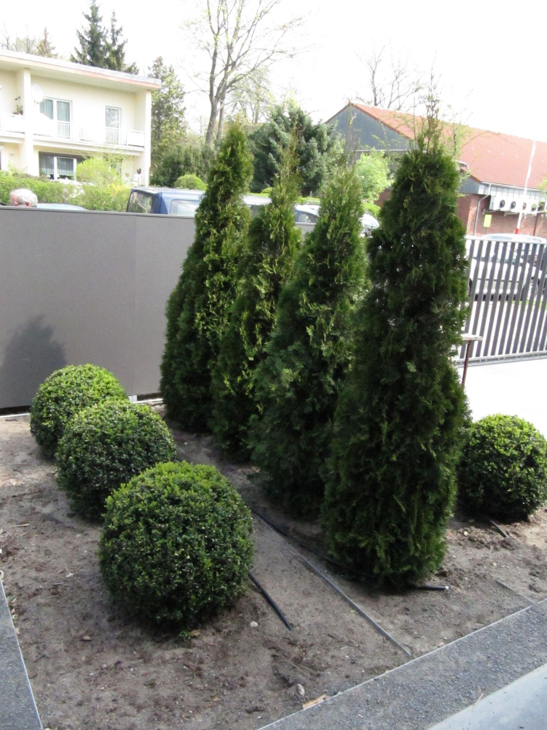 Gartengestaltung in Berlin und Brandenburg: Kombination aus Immergrünen Gehölzen, Stauden und Blütensträucher