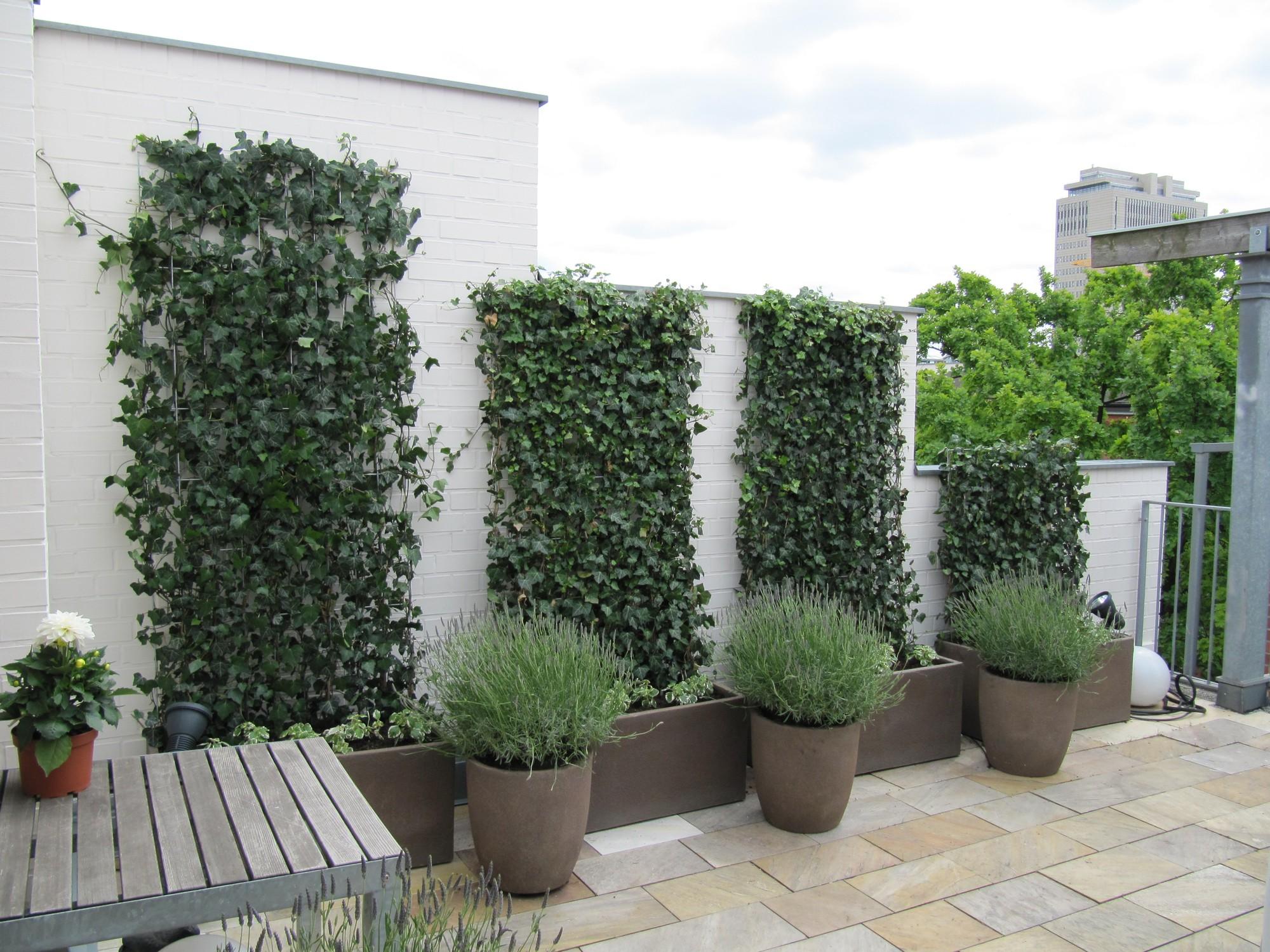 Ideen für moderne Terrassengestaltung: Mediterrane Terrassengestaltung mit immergrünen Gehölzen und winterharten Gefäßen, Begrünung der Wandbereiche auf der Dachterrasse