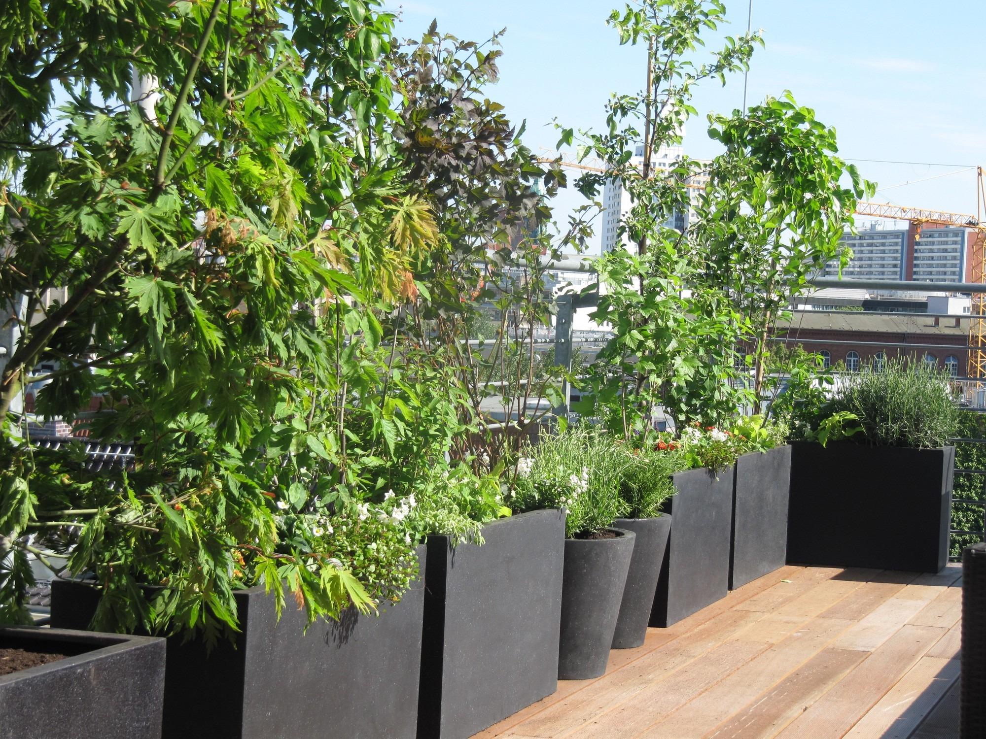Ideen für Dachterrassengestaltung mit Pflanzen in Berlin, Sichtschutzbepflanzung