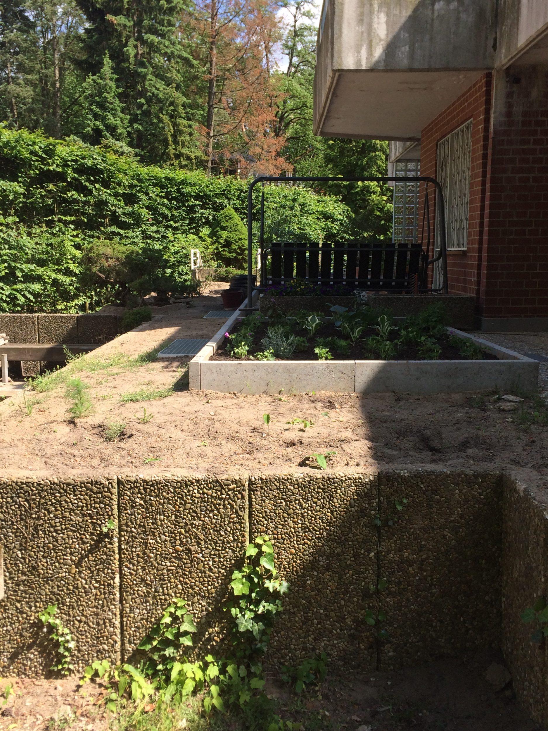 Umgestaltung von Gärten in Berlin: Begrünung mit Gehölzen und immergrünen Bäumen
