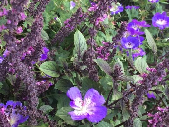 Umgestaltung von Gärten in Berlin: Begrünung mit Gehölzen, immergrünen Bäumen und farbenfrohen Stauden