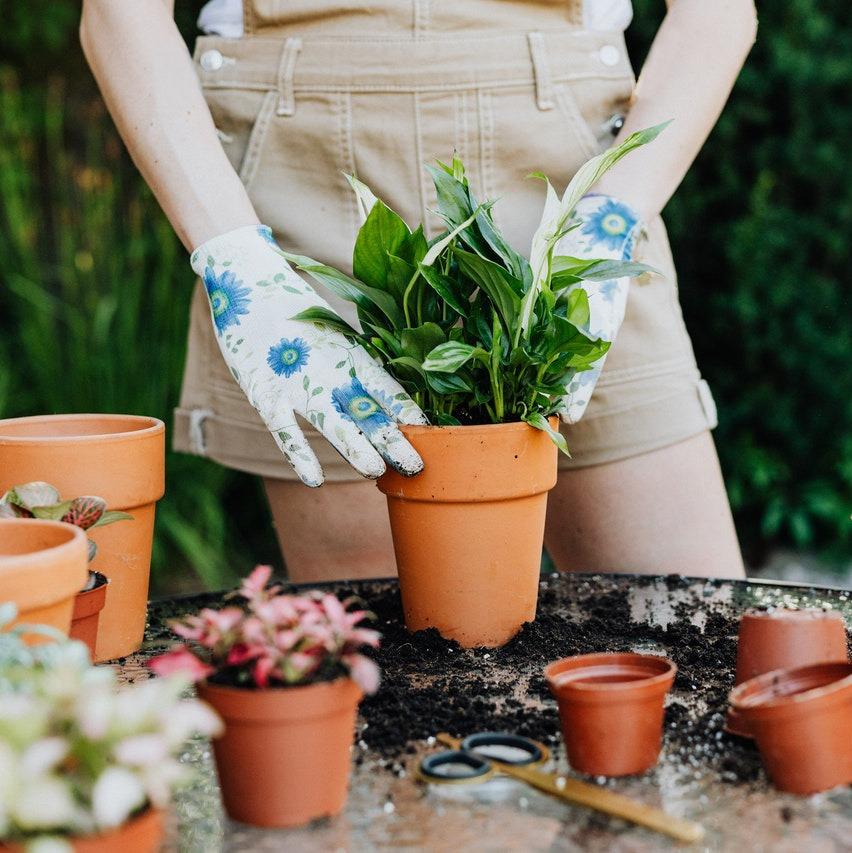 Frische Gartenideen Miriam Ott Gartenbauarchitekt Berlin Gartenplanung, Gartengestaltung, Gartenpflege, Landschaftsbau, Garteseminare