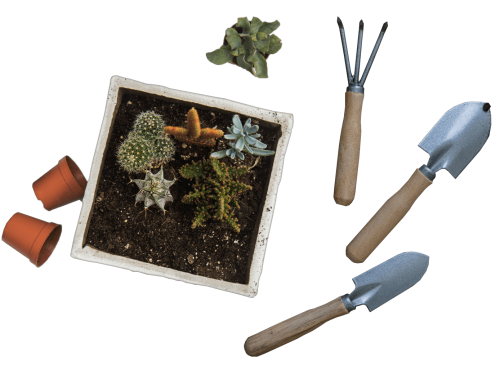 professionelle Gartenpflege in Berlin und Brandenburg: Bewässerung, Pflanzen- & Bodenpflege